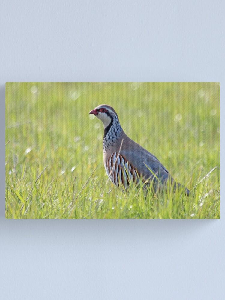 Alternate view of Red legged partridge Canvas Print