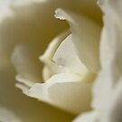 Butter and Cream by Belinda Osgood