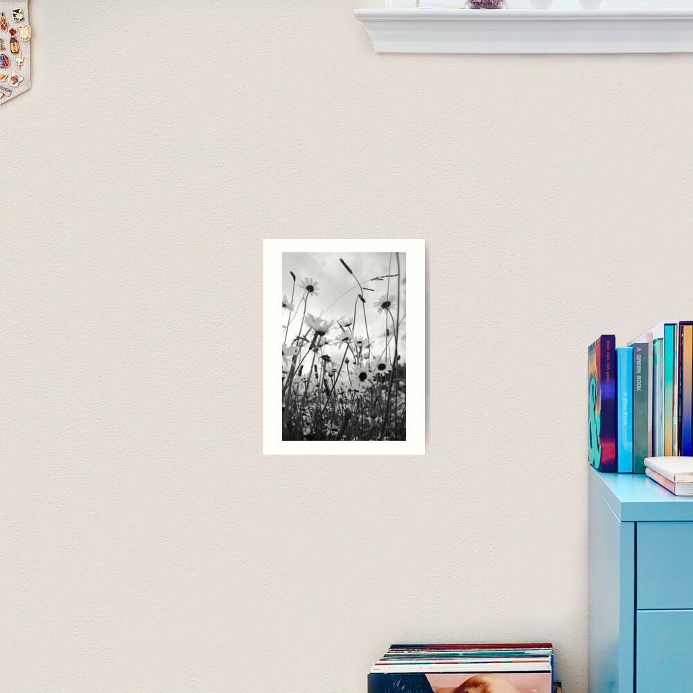 Oxeye daisies Art Print