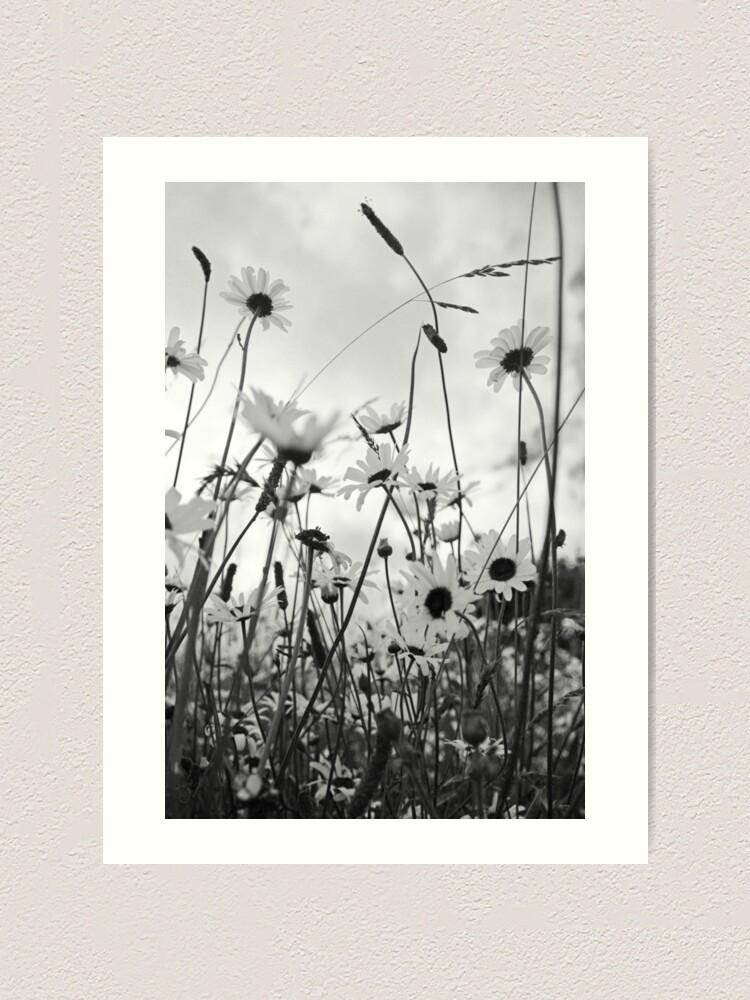 Alternate view of Oxeye daisies Art Print