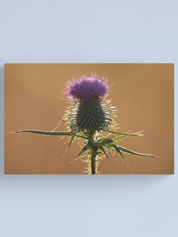 Alternate view of Thistle Canvas Print