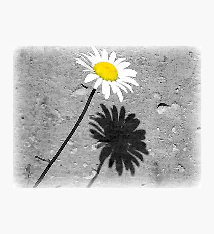 Daisy Shadow Fotodruck