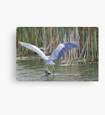 Wings Of Glory  Canvas Print
