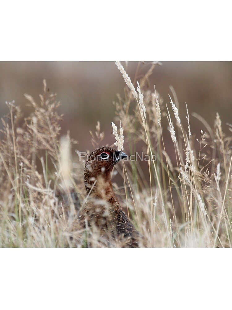Grouse pose by orcadia
