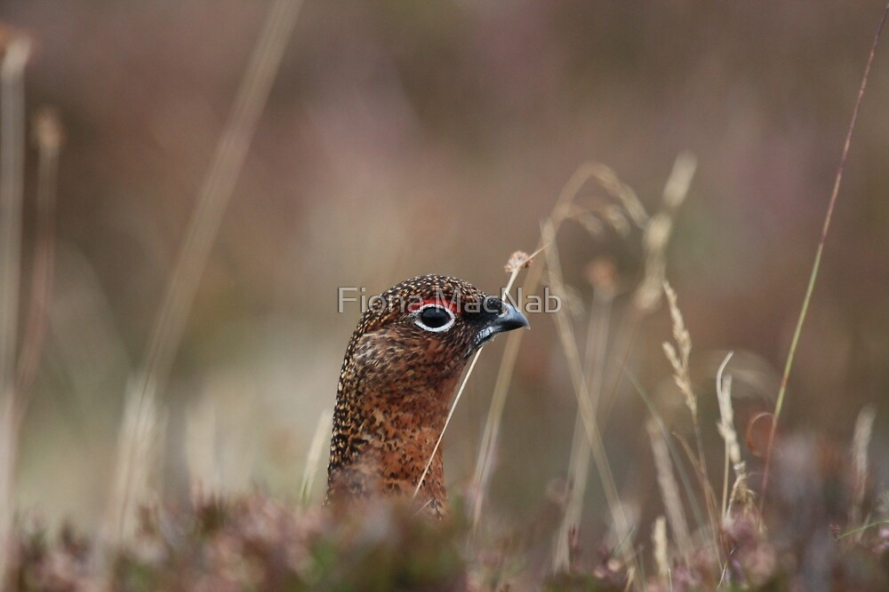 Head shot by Fiona MacNab