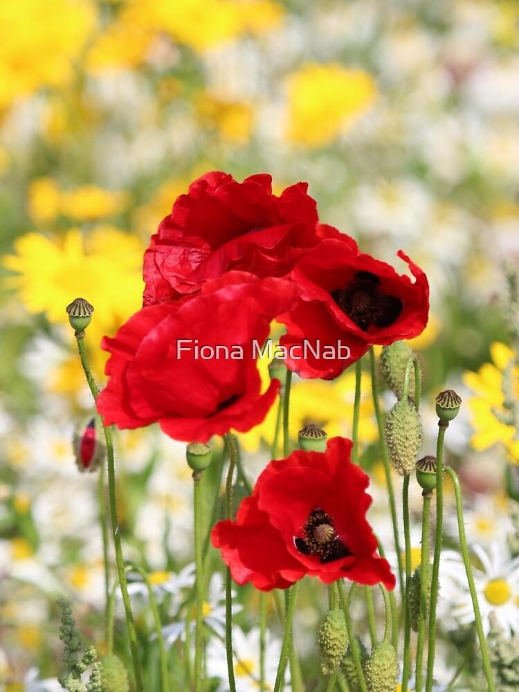 Poppy portrait by orcadia