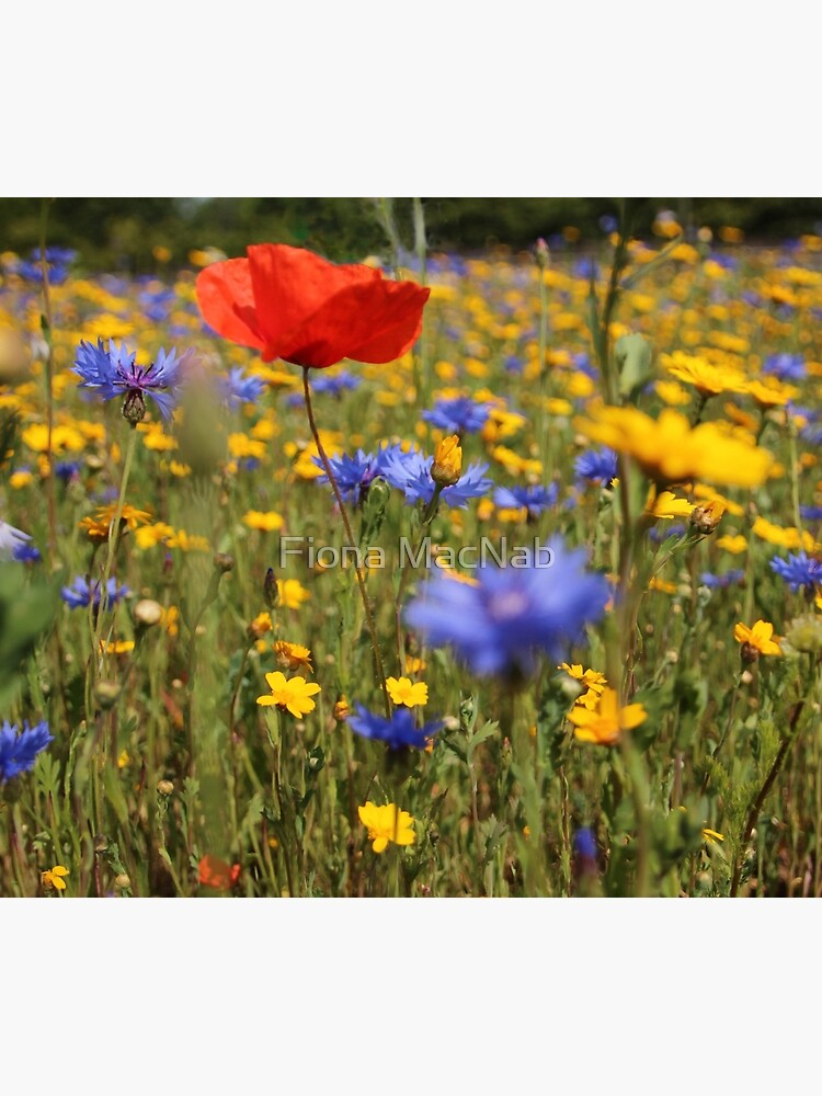Wildflower meadow by orcadia