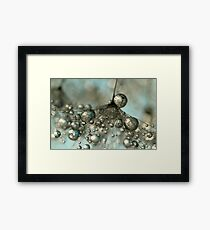 Dandy in Silver & Blue Framed Print