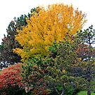 Fall Colors by NewfieKeith