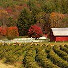 Virginia Farm by Tom Michael Thomas