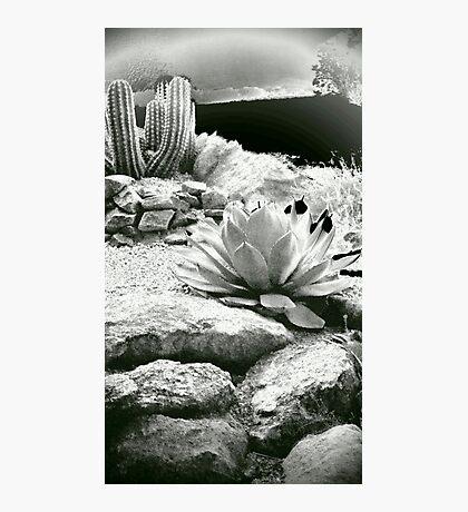 Western Landscape Photographic Print
