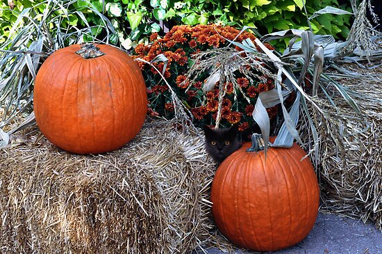 Harvest Pumpkins  by Elaine  Manley