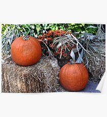 Harvest Pumpkins  Poster