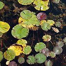 Colourful Lily Pads in Autumn by Ralph Angelillo