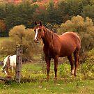 Mountain Horses by Tom Michael Thomas