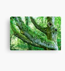 A Tree of Ages Past Canvas Print