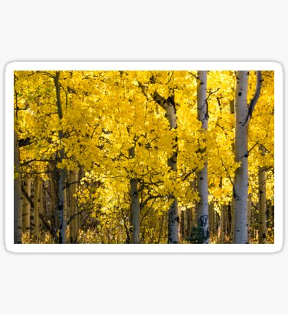 Fall in Alberta Sticker