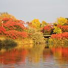 Sunset Reflection Fall Colors  by NewfieKeith
