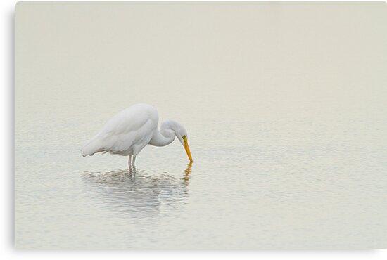 An Egret Finds Himself by Karol Livote