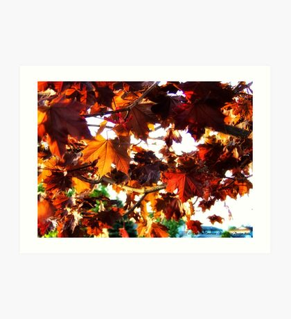 Fall Colors 2 Art Print