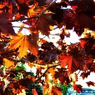 Fall Colors 2 by rocamiadesign