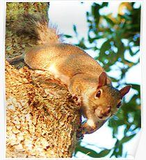 Tree Squirrel, Panasonic Lumix Poster