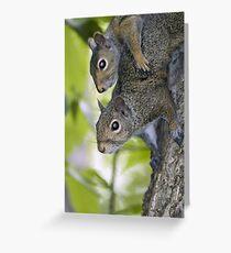 Sibling squirrels Greeting Card