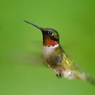 Ruby-throated hummingbird I by Mundy Hackett