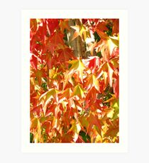 FALL COLOUR AT THE GETTY, PANASONIC LUMIX Art Print