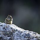 Praying chipmunk by Mundy Hackett