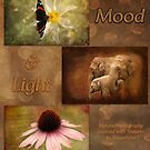 Mood and Light - Calendar by steppeland