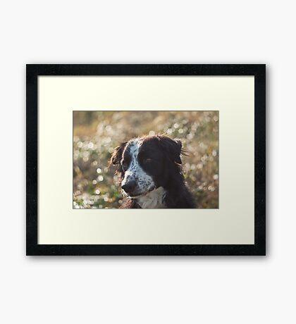 Bubbled dog Framed Print