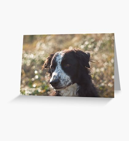 Bubbled dog Greeting Card