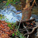 Autumn in the Glen by Raider6569