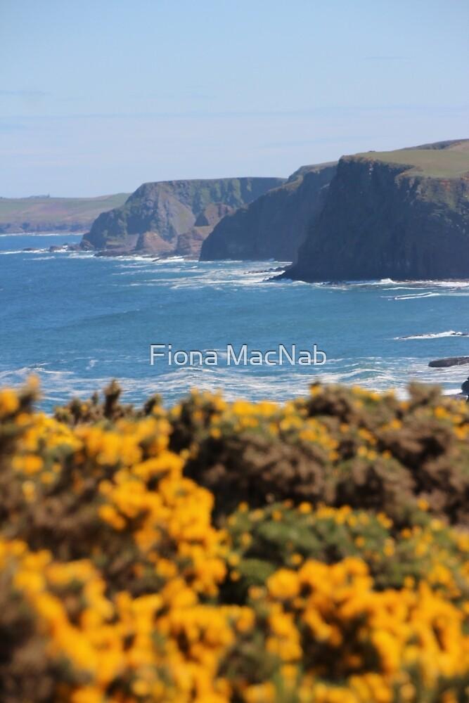 Springtime gorse by Fiona MacNab