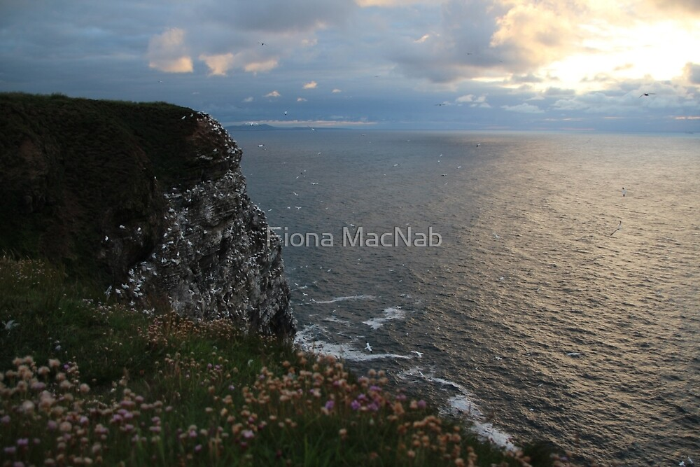 Troup Evening by Fiona MacNab