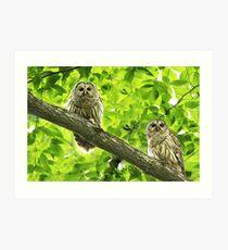 Barred Owl (Strix varia) Art Print