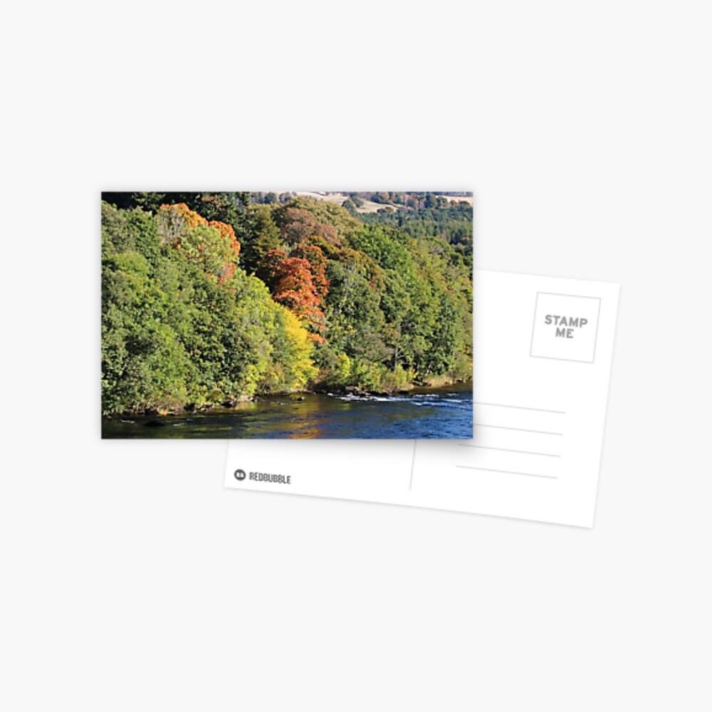 Gilmpses of autumn Postcard