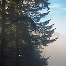 fir trees waking by TerrillWelch