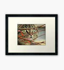 Do you think the birds can see me? Framed Print