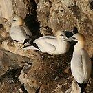 Nesting by Fiona MacNab
