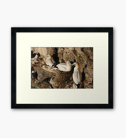 Nesting Framed Print