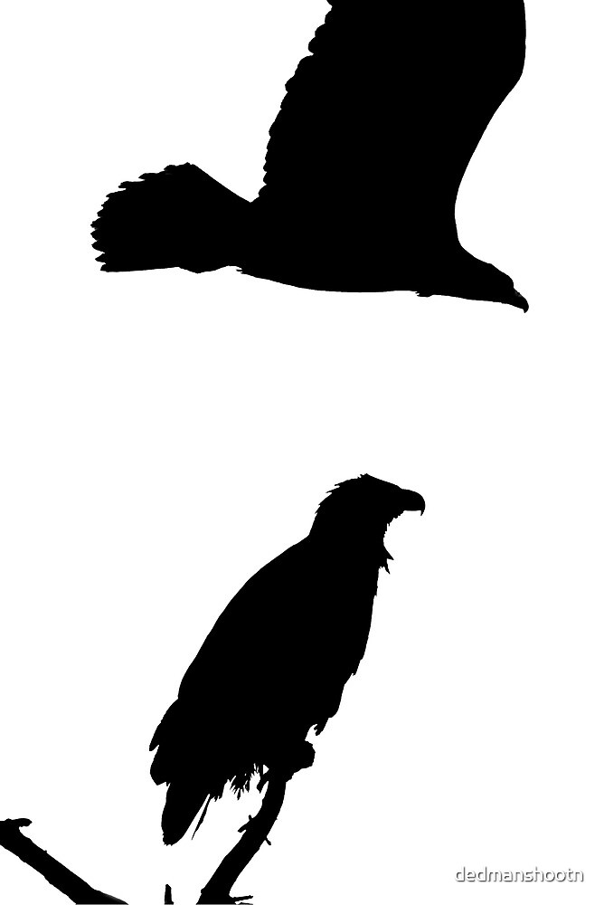 on the snag and on the wing eagles silhouette by dedmanshootn