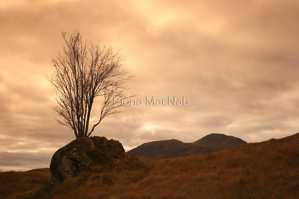 Rannoch Moor by Fiona MacNab