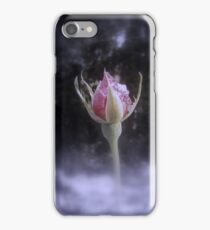 rosebud in the snow 3, tinted iPhone Case/Skin