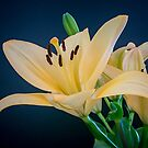 Lilies by George Lenz