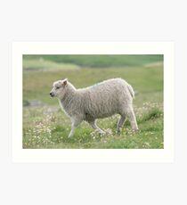Shetland lamb Art Print