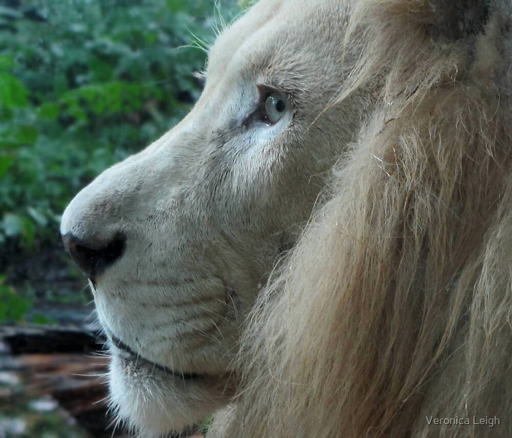 Profile of a King by Veronica Schultz