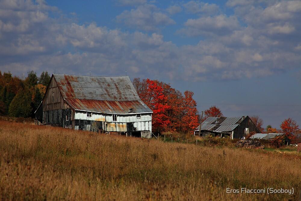 Autumn country barn near Echo Bay Ontario Canada by Eros Fiacconi (Sooboy)