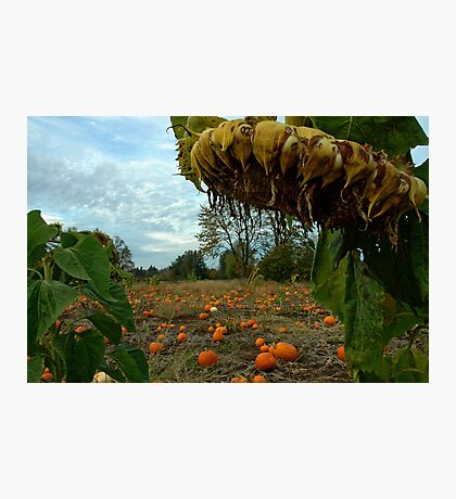 Grandpa's Pumpkin Patch Photographic Print
